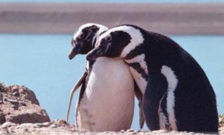 Photo of Festival Internacional de Cine infantil Pingüinos del sur